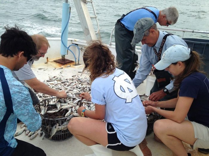 A crew sets the hooks for sharks after trawling for bait in 2019. (Photo courtesy of the UNC Institute for Marine Sciences)