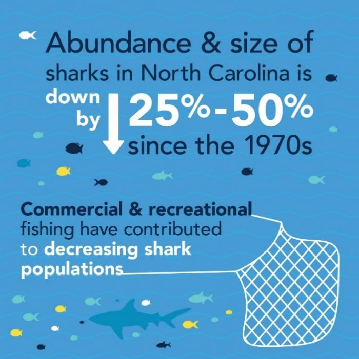Infographic of the percentage of shark species decline