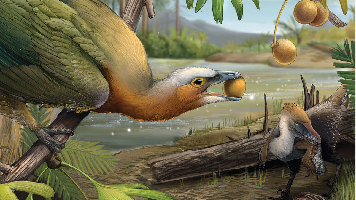 Art for cover of Feduccia's new book showing Early Cretaceous Chinese toothed bird and a