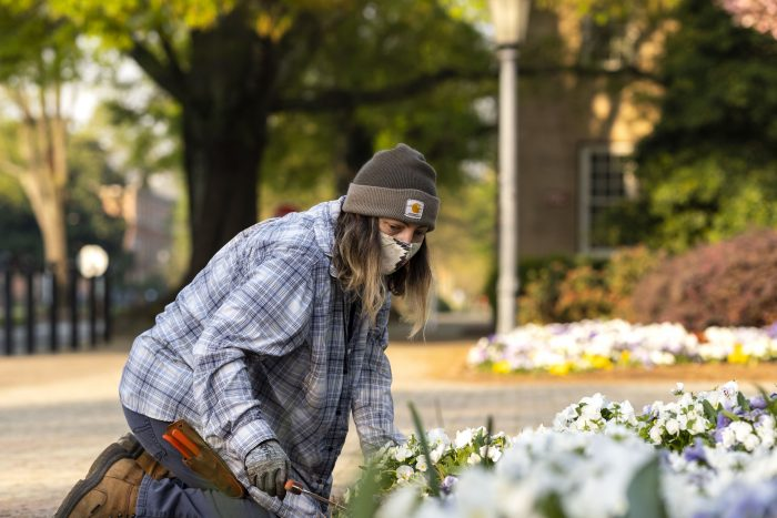 """Krystal King works in a flowerbed near the Old Well. The usual planting of annuals and perennials that makes Carolina one of the most beautiful campuses carried on, thanks to King and her co-workers who worked on campus throughout the pandemic. """"It's felt like there's not enough time to get it all done,"""" King said."""