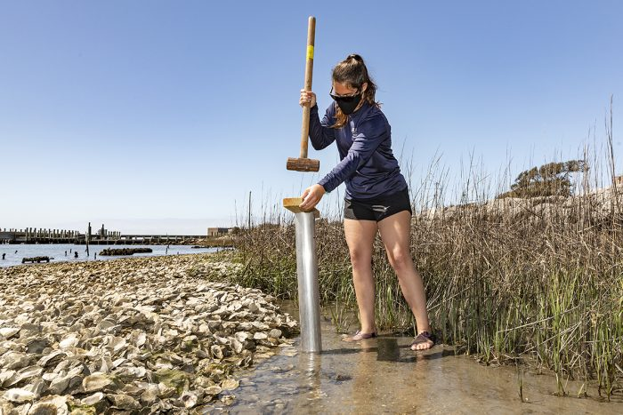 """Graduate research assistant Molly Bost collects sediment samples on the shoreline of the Institute of Marine Sciences on March 30, 2021, in Morehead City. Bost, who obtained her undergraduate and master's degrees from UNC, is currently a PhD candidate working on the shoreline restoration project with professors Antonio Rodriguez and Michael Piehler and associate professor Joel Fodre. According to the project team leaders, their goal is to create a new carbon offset for UNC through the creation of a saltmarsh and oyster-reef habitat near the IMS shorefront. They indicate that saltmarshes are """"blue carbon"""" habitats which fix carbon dioxide in excess of respiration and bury carbon in sediments. The oyster-reef acts as a barrier, protecting the saltmarsh from waves and currents. Team leaders said their hope is for the project to serve as an enduring educational tool and demonstration of UNC's broad vision in the ongoing efforts to achieve carbon neutrality. The IMS is an off-campus research laboratory, teaching, outreach, and service unit of the University of North Carolina at Chapel Hill. (Johnny Andrews/UNC-Chapel Hill)"""