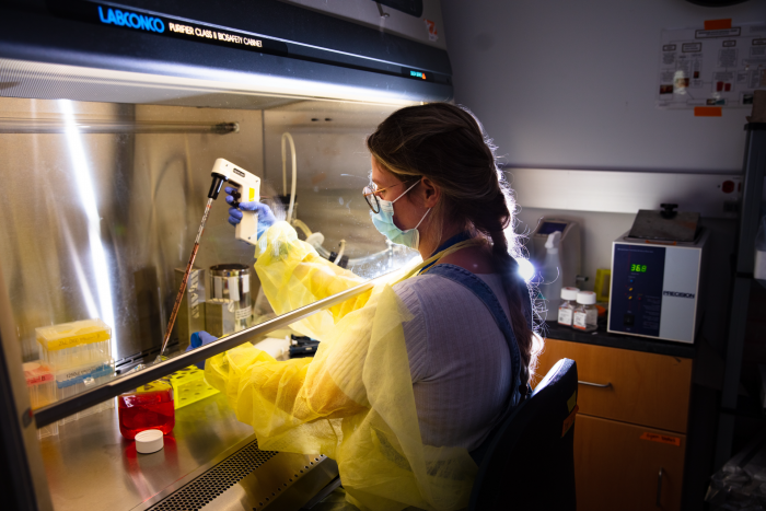 A lab assistant works with stem cells in Strahl's lab.