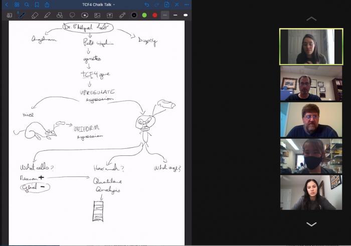 zoom screen whiteboard drawings about genetics